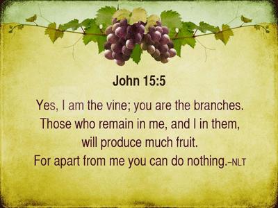 Jesus the Vine John 15